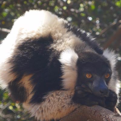 Madagaskar (008)